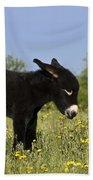 Donkey Foal Beach Towel
