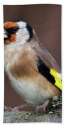 European Goldfinch Bird Close Up   Beach Towel