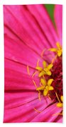 Fuchsia Pink Zinnia From The Whirlygig Mix Beach Towel