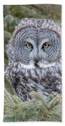 Great Gray Owl Beach Towel