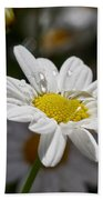 Marguerite Daisy Beach Towel