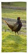 Mr Pheasant Beach Towel