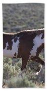 Mustang Stallion Beach Towel