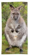 Wallaby Outside By Itself Beach Towel