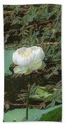 White Lotus Flower Flower Lotus Nature Summer Green Plant Blossom Asian Beach Towel