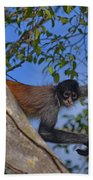 48- Capuchin Monkey Beach Towel