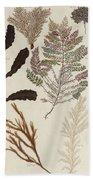 Aquatic Animals - Seafood - Algae - Seaplants - Coral Beach Towel