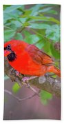 Cardinal Birds Hanging Out On A Tree Beach Towel