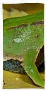Darwins Frog Beach Towel