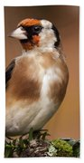 European Goldfinch Bird Close Up   Beach Towel