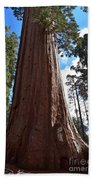 Giant Sequoia Trees Beach Towel