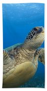 Hawaii, Green Sea Turtle Beach Towel
