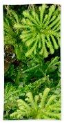 Mehu�n Green Frog Beach Towel