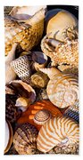 Mix Group Of Seashells Beach Towel