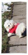 My Small Dog Beach Towel