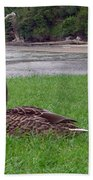 New Zealand - Mallard Ducks On The Grass Beach Towel