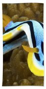Nudibranch Feeding On Algae, Papua New Beach Towel