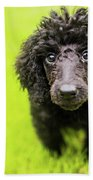 Poodle Puppy Beach Sheet