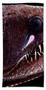 Threadfin Dragonfish Beach Towel