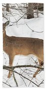 White-tailed Deer Beach Towel