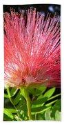 Australia - Caliandra Red Flower Beach Towel