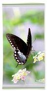 5276-001- Butterfly - Swallowtail Beach Towel