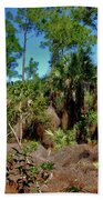 55- Everglades Afternoon Beach Towel