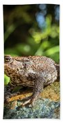 Amphibian, Common British Toad / Frog Beach Towel