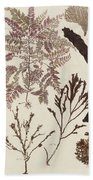 Aquatic Animals - Seafood - Algae - Seaplants - Coral Beach Towel