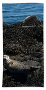 Clear Day Barn Beach Towel