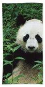 Giant Panda Ailuropoda Melanoleuca Beach Towel by Cyril Ruoso