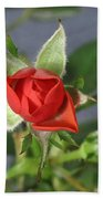 Red Rose Blooming Beach Towel