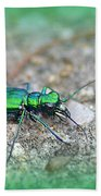 6-spotted Green Tiger Beetle Beach Towel