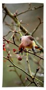 6634-002 - Cedar Waxwing Beach Towel
