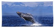 Humpback Whale Breaching Beach Towel