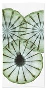Opium Poppy Pods, X-ray Beach Towel