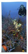 Scuba Diver Swims Underwater Amongst Beach Towel by Terry Moore