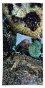 Wedding Rock At Patrick's Point State Park - California Beach Towel