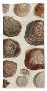 Aquatic Animals - Seafood - Shells - Mussels Beach Towel