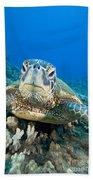 Hawaii, Green Sea Turtle Beach Towel