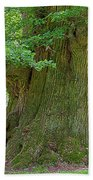 800 Years Old Oak Tree  Beach Towel by Heiko Koehrer-Wagner