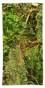Mosses And Liverworts 8861 Beach Towel