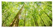 cypress forest and swamp of Congaree National Park in South Caro Beach Towel