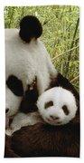 Giant Panda Ailuropoda Melanoleuca Beach Towel by Katherine Feng
