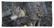 Gray Wolf And Cubs Beach Sheet
