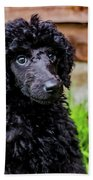Poodle Puppy Beach Towel