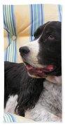#940 D1054 Farmer Browns Springer Spaniel Beach Towel
