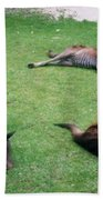 Australian Native Animals Beach Towel
