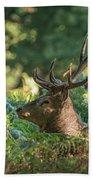 Majestic Powerful Red Deer Stag Cervus Elaphus In Forest Landsca Beach Towel