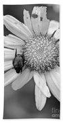 A Beetle And A Daisy  Beach Towel